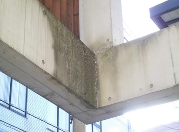 梁端部に藻・黒カビが集中して発生